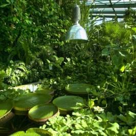 https:::www.bern.com:en:detail:botanic-garden